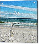 Coastal Life Acrylic Print