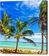 Coastal Palm Trees Acrylic Print
