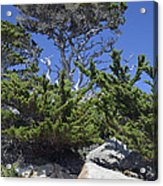 Coastal Trees In California's Point Lobos State Natural Reserve Acrylic Print by Bruce Gourley