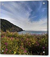 Coastal Wildflowers Of Oregon Acrylic Print