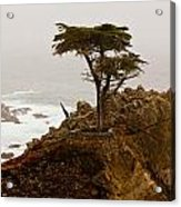Coastline Cypress Acrylic Print