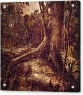 Coba Tree Acrylic Print by Stuart Deacon
