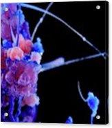 Cobalt Chloride Crystals Acrylic Print