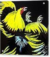 Cock Fight Or Flight Acrylic Print