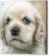 Cocker Pup Portrait Acrylic Print