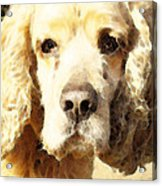 Cocker Spaniel Art - Mellow Yellow Acrylic Print