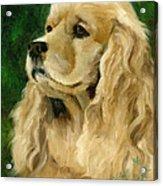 Cocker Spaniel Dog Acrylic Print by Alice Leggett