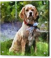 Cocker Spaniel Outside 04 Acrylic Print