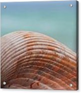 Cockle Shell Acrylic Print