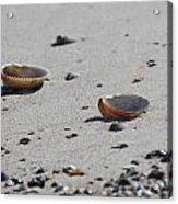 Cockle Shells On Little Island Acrylic Print