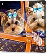 Coco And Lola Acrylic Print