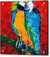 Coco The Talkative Parrot Acrylic Print
