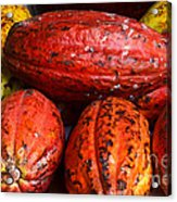 Cocoa Pods Acrylic Print