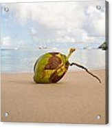 Coconut Acrylic Print