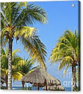 Coconut Palm Forest Acrylic Print by Charline Xia