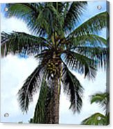 Coconut Palm Tree Acrylic Print
