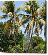 Coconut Palm Trees In Key West Acrylic Print