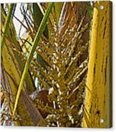 Coconut Shoot Acrylic Print
