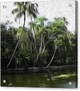 Coconut Trees And Other Plants Lined Up Acrylic Print