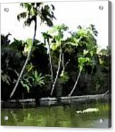 Coconut Trees And Others Plants In A Creek Acrylic Print