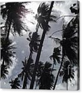 Coconut Trees In Barbados Acrylic Print