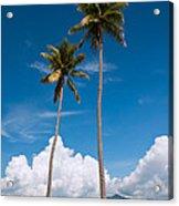 Coconut Trees Acrylic Print