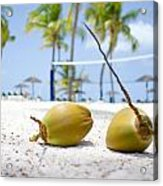 Coconuts Acrylic Print