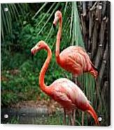 Code Pink Acrylic Print by Skip Willits