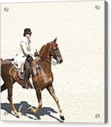 Coffee Saddlebred Acrylic Print