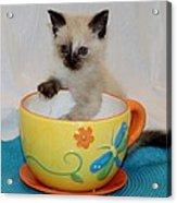 Coffee With A Friend Acrylic Print