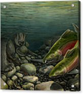 Coho Fishing Acrylic Print