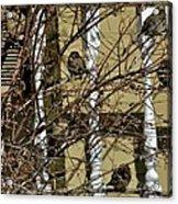 Cold Birds Acrylic Print