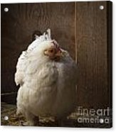 Cold Chicken Acrylic Print