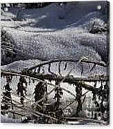 Cold Death Acrylic Print