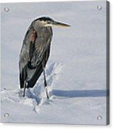 Cold Feet Acrylic Print