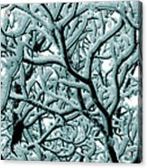 Cold Frosted Limbs Above Acrylic Print
