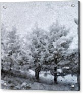 Cold Spell Acrylic Print