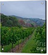 Colibri Vineyards Acrylic Print