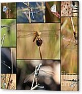 Collage Marsh Life Acrylic Print
