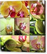 Collage Orchids 01yellow Green - Elena Yakubovich Acrylic Print