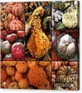 Collage - Pumpkins - Gourds - Elena Yakubovich Acrylic Print