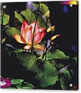 Sunset Lily Acrylic Print