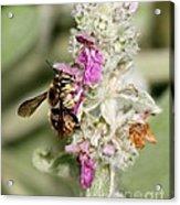 Collecting Nectar Acrylic Print