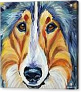 Collie Acrylic Print by Melissa Smith