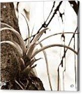Collier-seminole Sp 18 Acrylic Print