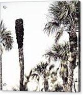 Collier-seminole Sp 24 Acrylic Print
