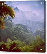 Colombia Forrest Acrylic Print