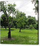 Colonial Apple Orchard Acrylic Print