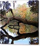 Color Beyond The Branches Acrylic Print