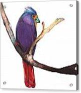 Color Bird 7 Acrylic Print